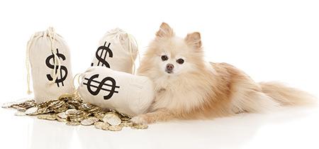 犬にかかるお金