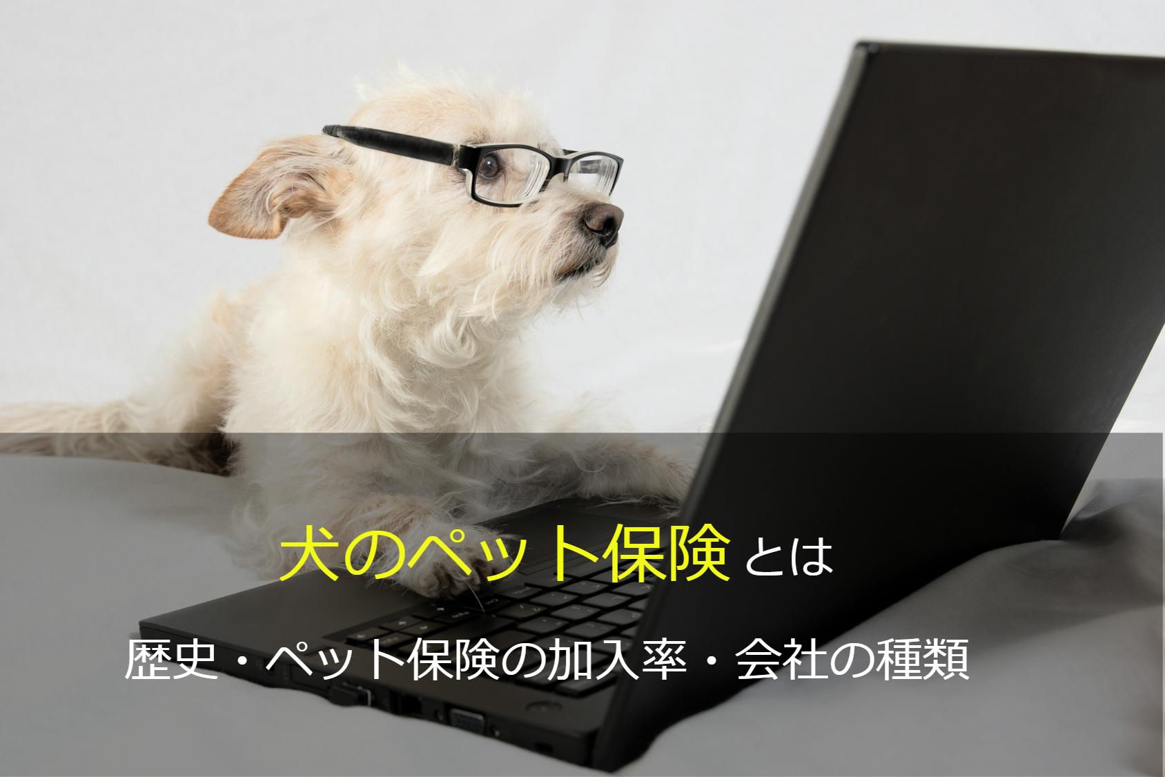 犬のペット保険とは