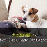 犬の室内飼いで、意外と知られていない5大リスクとは?