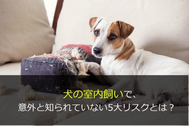 犬の室内飼いで意外と知られていない5大リスクとは?