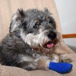 犬の骨折 骨折しやすい犬種、症状、場所、治療内容・治療費について