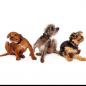 犬の皮膚病・皮膚炎 かかりやすい犬種と皮膚病の種類、治療や予防について